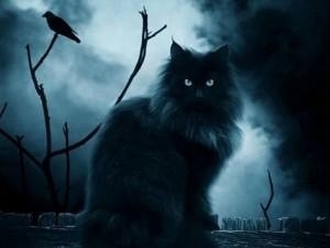 Állati horoszkóp: a macska