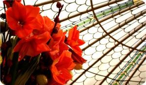 9 virág asztrológia