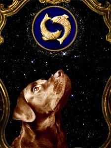 Kutya horoszkóp